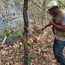 Vereador Luis Costa indica a criação de uma brigada de incêndio em Primavera do Leste